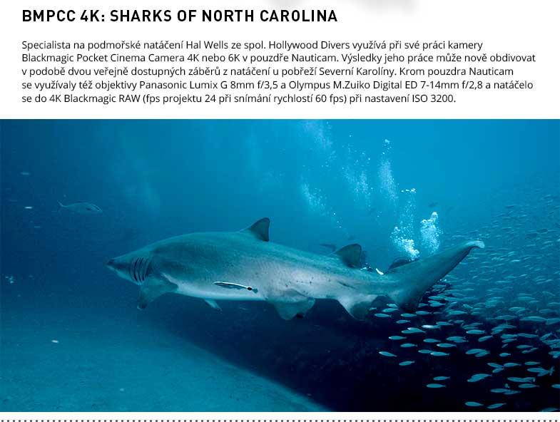 BMPCC4K SHARKS OF NORTH CAROLINA